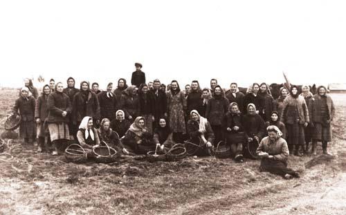 1950. Асiрацелi. Калгас імя Сталіна. 1949 год