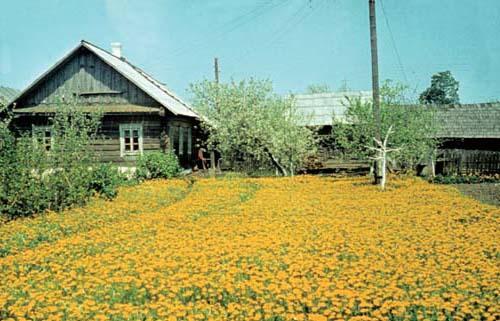 Вёскі Вецяра-Крывічаны Капачы 2000 год